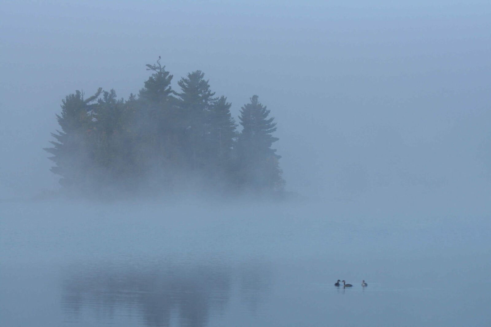 Image of a fog setting in in early morning at the Boundary Waters
