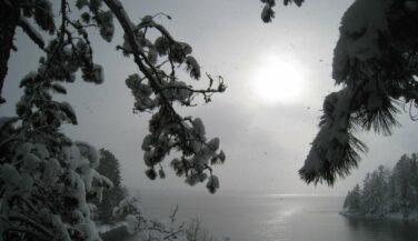 Snowy trees in the BWCA